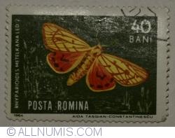 Imaginea #1 a 40 Bani 1964 - Rhyparioides metelkana