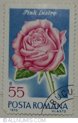 55 Bani 1970 - Pink lustre