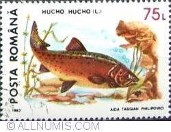 75 Lei - Hucho Hucho