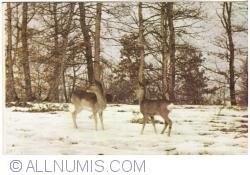 Image #1 of Deers