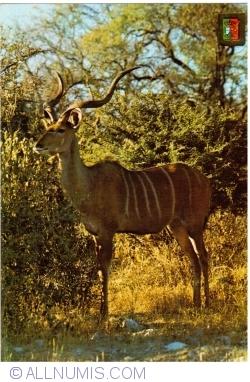 Image #1 of Angola - Antelope