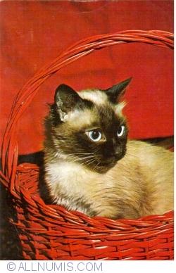 Image #1 of Cat