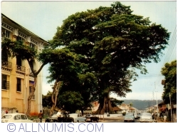 Image #1 of Freetown - The Cotton Tree