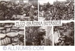 Image #1 of Cluj - Botanical Garden (1965)