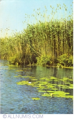 Image #1 of Danube Delta Landscape
