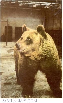 Image #1 of Bear