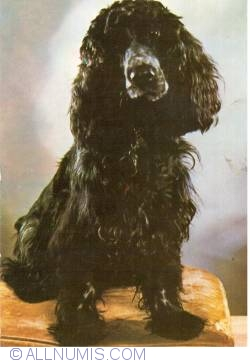 Image #1 of Cocker Spaniel