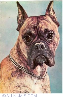 Image #1 of Boxer