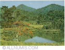 Image #1 of A landscape of forests Guinea