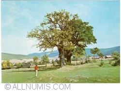 Image #1 of Zagon - Oak's Mikes (1974)