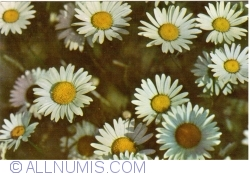 Image #1 of Daisies (1965)