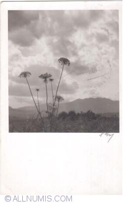 Image #1 of Landscape (1938)