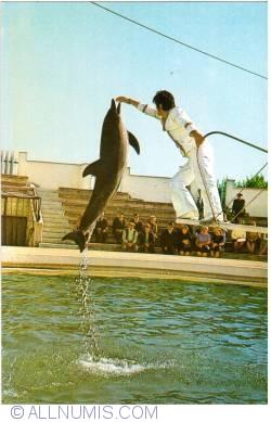 Image #2 of Constanta - Dolphinarium