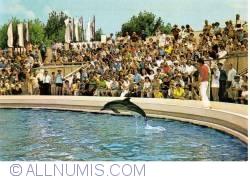 Image #1 of Constanta - Dolphinarium