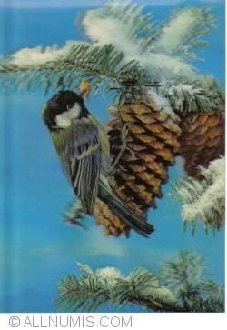 Image #2 of Bird