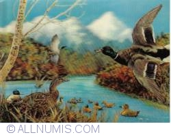 Image #2 of Birds