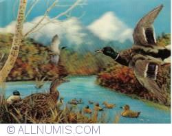 Image #1 of Birds
