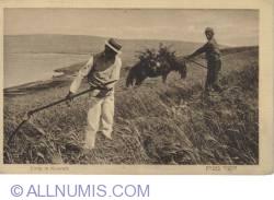 Image #1 of Kinereth-harvest