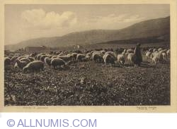 Image #1 of Jabneel-sheep s herd and sheppard