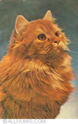 Image #2 of Cat