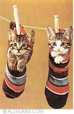 Image #1 of Cats