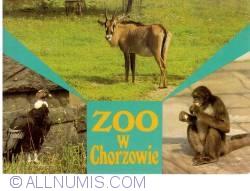 Imaginea #1 a Katowice - Gradina zoologică