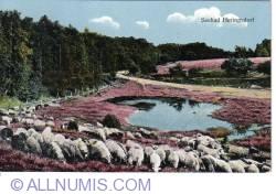 Image #1 of Heringsdorf - Sheep herd