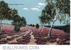 Image #1 of Heringsdorf - Field