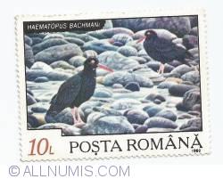 10 Lei - Haematopus Basmani