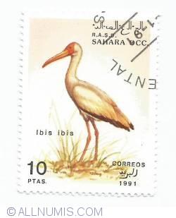 Imaginea #1 a 10 pesetas- Ibis ibis
