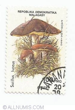 Image #1 of 100 francs - Sullus luteus