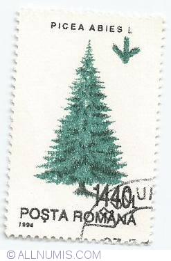 1440 lei - Picea abies