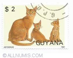 Imaginea #1 a 2 dolari - Abyssinian cats