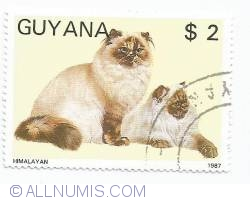 Image #1 of 2 Dollars - Himalayan cats