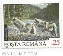 25 Lei - Canis Lupus