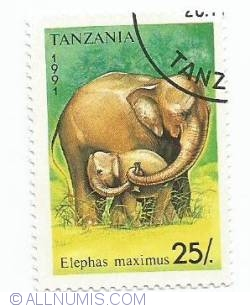 Image #1 of 25 Shillings - Elephas maximus
