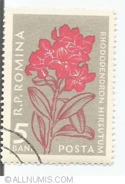 Imaginea #1 a 5 bani - Rhododendron hirsutum