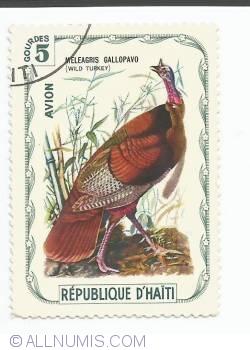 Image #1 of 5 Gourdes - Wild turkey