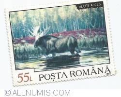 55 Lei - Alces Alces