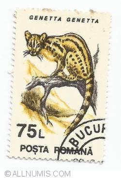 75 Lei - Genetta Genetta