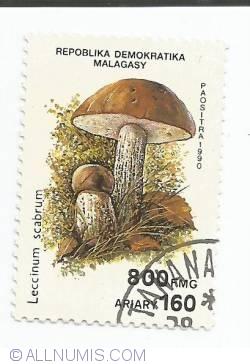 Image #1 of 800 Francs -  Leccinum scabrum