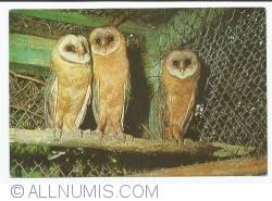 Image #1 of owl