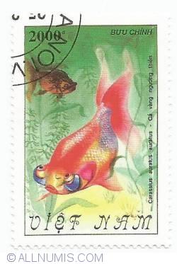 Image #1 of 2000 Dong - Carassius auratus auratus