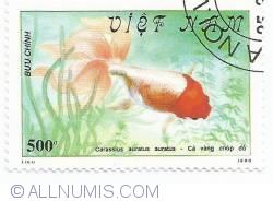 Image #1 of 600 Dong - Carassius auratus auratus