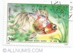 Image #1 of 300 Dong - Carassius auratus auratus
