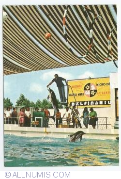Image #1 of Constanța - Dolphin Show at Dolphinarium