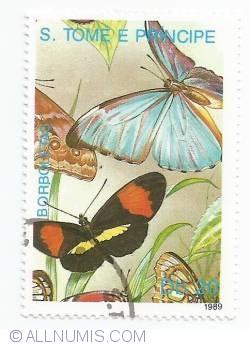 Imaginea #1 a 20 Dobras - Fluturi
