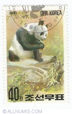 Image #1 of 40 Chon - Panda