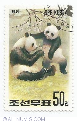 Image #1 of 50 Chon - Panda