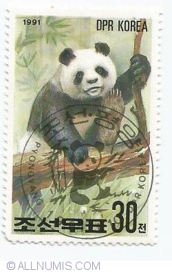 Image #1 of 30 Chon - Panda